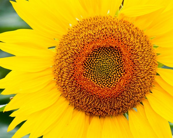 website photos uxbridge